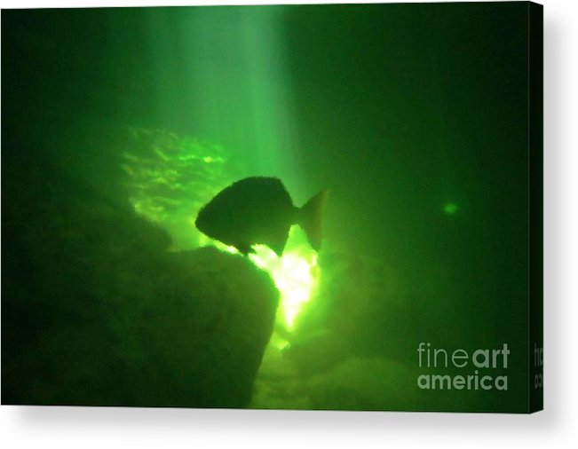 Tropical Fish Shilouette In A Cenote Acrylic Print featuring the photograph Tropical Fish Shilouette In A Cenote by Halifax photography by John Malone