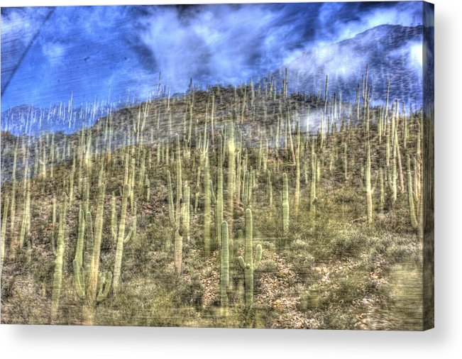 Cactus Acrylic Print featuring the photograph Tucson by Ethan Bach