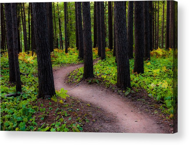 early Fall fall Colors forest Trees autumn Forest amity Woods Duluth Minnesota Nature Serenity Magic Changes greeting Cards nature Greeting Cards Woods mary Amerman Acrylic Print featuring the photograph Turning by Mary Amerman
