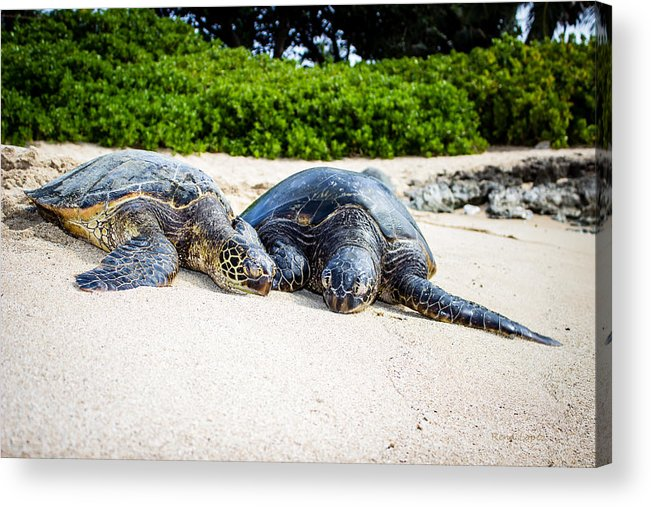 Turtle Acrylic Print featuring the photograph Turtle Lovin by Rena Lopez