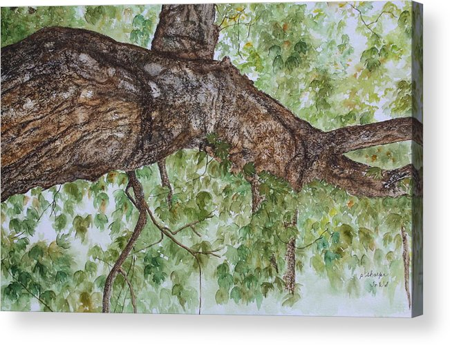 Nature Acrylic Print featuring the painting Twisted Maple by Patsy Sharpe