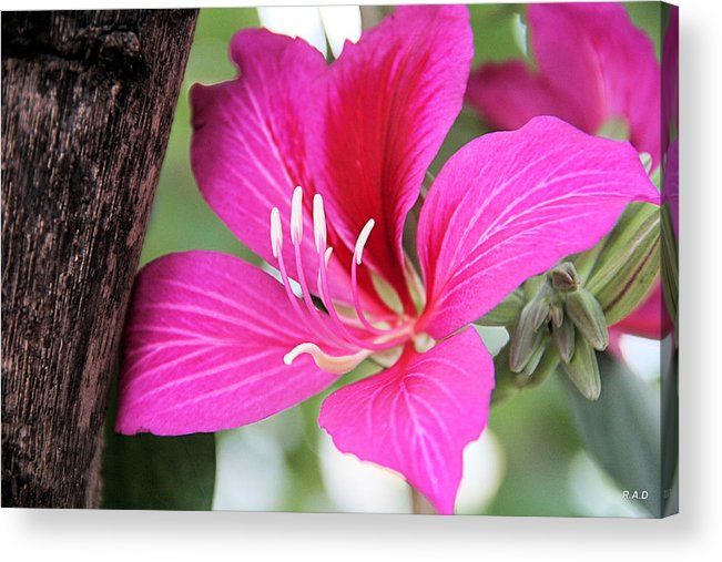 Flowers Acrylic Print featuring the photograph Up Against The Wood by Rich D'Amato