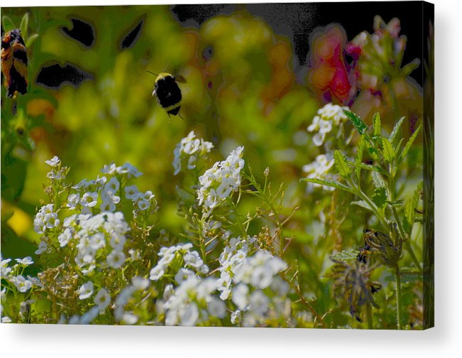 Bee Acrylic Print featuring the photograph Uplifting by Jeri lyn Chevalier