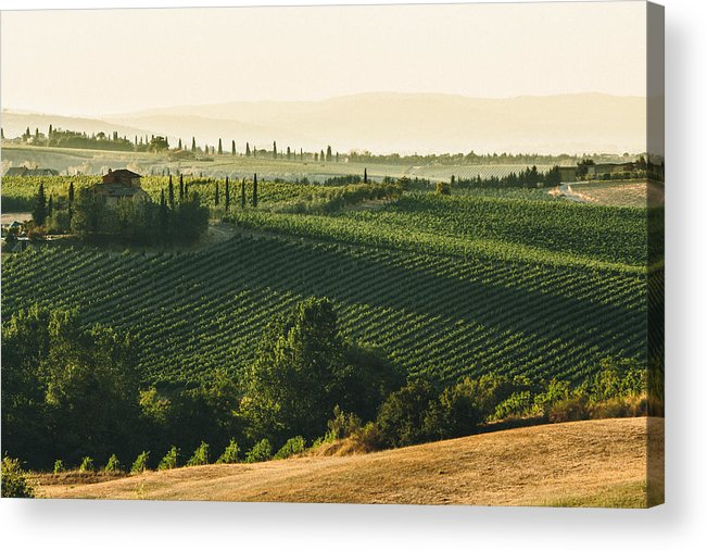 Fine Art Acrylic Print featuring the photograph Vineyard From Above by Clint Brewer