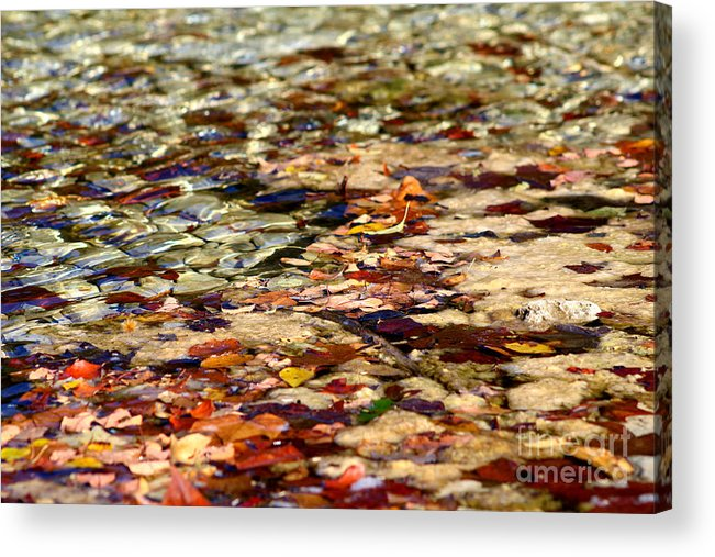 Red Reddingleaf Acrylic Print featuring the photograph Red Reddingleaf by Laurette Escobar