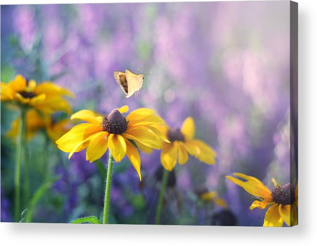 Butterflies On Flowers Acrylic Print featuring the photograph Wanderlust by Amy Tyler