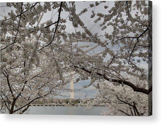 America Acrylic Print featuring the photograph Washington Monument - Cherry Blossoms - Washington Dc - 011323 by DC Photographer
