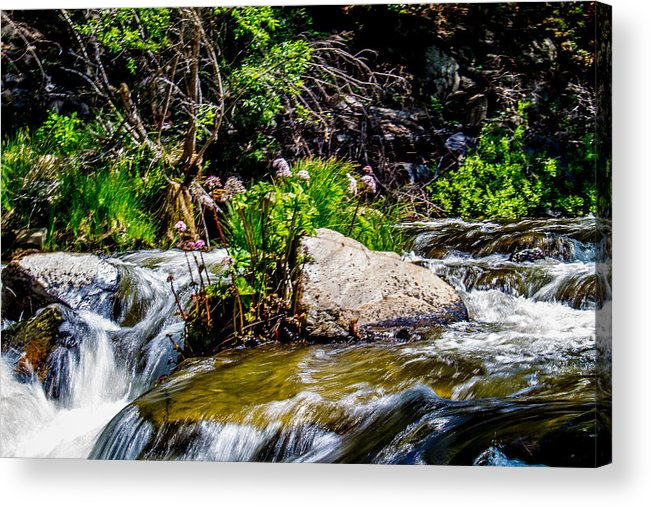 Yosemite Acrylic Print featuring the photograph Water Garden by Brian Williamson