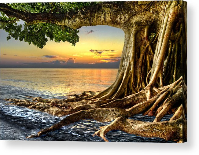 Fine Acrylic Print featuring the photograph Wet Dreams by Debra and Dave Vanderlaan