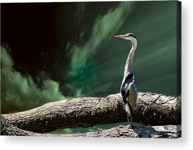 Bird Acrylic Print featuring the photograph What's Up?? by Christine Sponchia