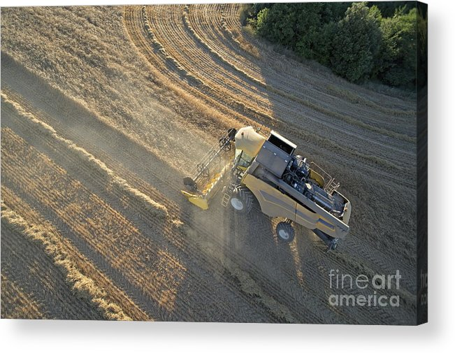 Abundance Acrylic Print featuring the photograph Wheat Harvest In Provence by Sami Sarkis