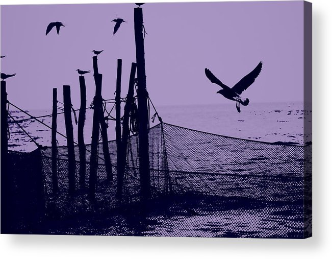 Seagulls Acrylic Print featuring the photograph Where The Fish Are by Sheryl Bergman