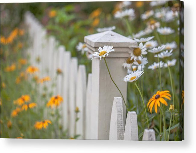 Daisies Acrylic Print featuring the photograph White And Yellow by June Marie Sobrito
