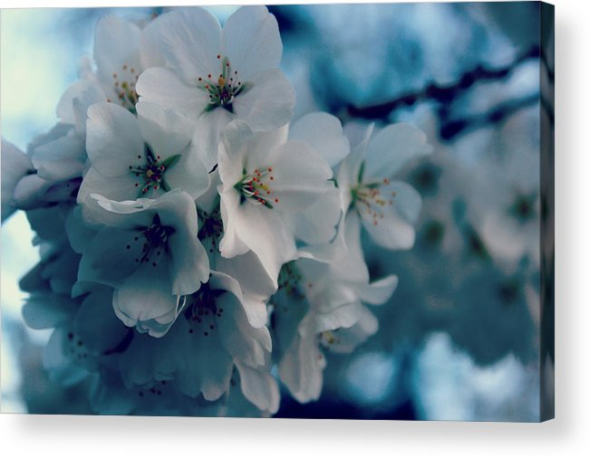 Nature Acrylic Print featuring the photograph White Bloom by Samson Odembo