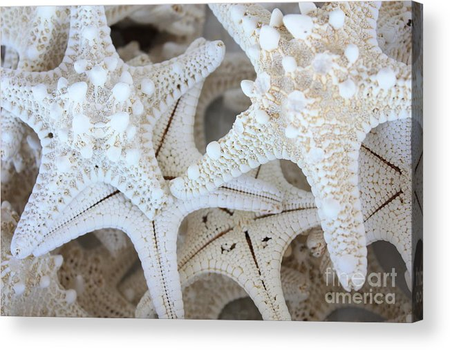 White Acrylic Print featuring the photograph White Starfish by Carol Groenen