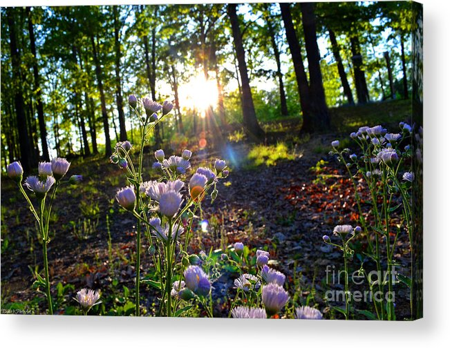 Nature Acrylic Print featuring the photograph Wildflower Sunset by Debbie Portwood