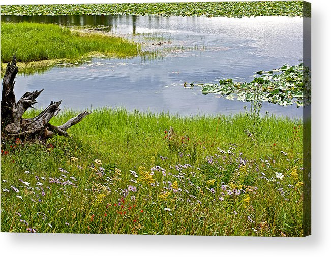 Wildflowers By Heron Pond In Grand Teton National Park Acrylic Print featuring the photograph Wildflowers By Heron Pond In Grand Teton National Park-wyoming by Ruth Hager