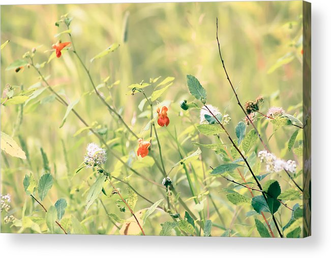 Wildflowers Acrylic Print featuring the photograph Wildflowers In Bloom by Elizabeth Thomas