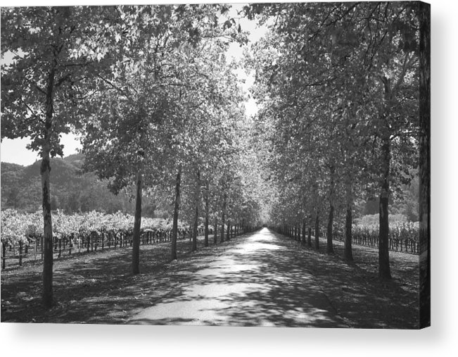 Black And White Acrylic Print featuring the photograph Wine Country Napa Black And White by Suzanne Gaff