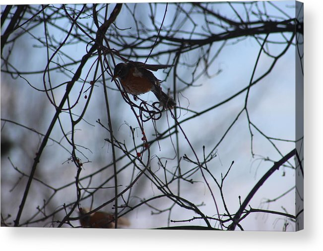 Winter Bird Acrylic Print featuring the photograph Winter Birds 2 by Stephen Connelly