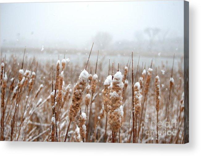 Winter Acrylic Print featuring the photograph Winter In The Heartland 6 by Deborah Smolinske