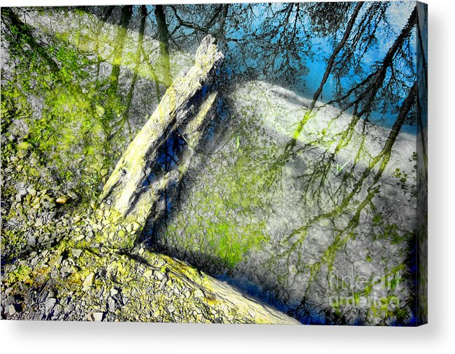 Abstract Acrylic Print featuring the photograph Wood Reflections by Olivier Le Queinec