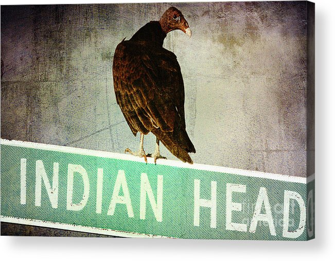 Turkey Vulture Acrylic Print featuring the photograph Wrong Turn by Trish Mistric