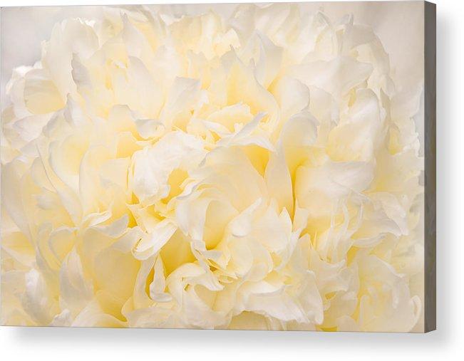 Peony Acrylic Print featuring the photograph Yellow Peony Petals by Leda Robertson