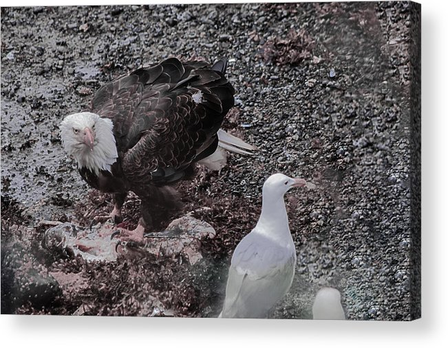 Seagull Acrylic Print featuring the photograph You'll Have To Wait Your Turn by David Kehrli