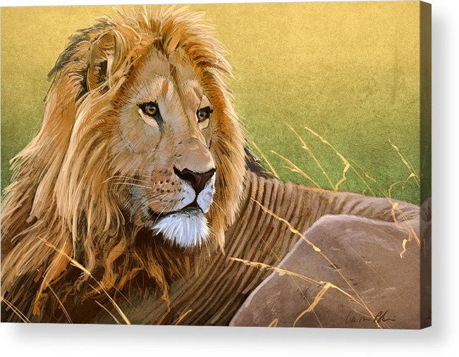 Lion Acrylic Print featuring the digital art Young Lion by Aaron Blaise