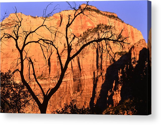 Home Decor Acrylic Print featuring the photograph Zion Tree by Jeff Leland