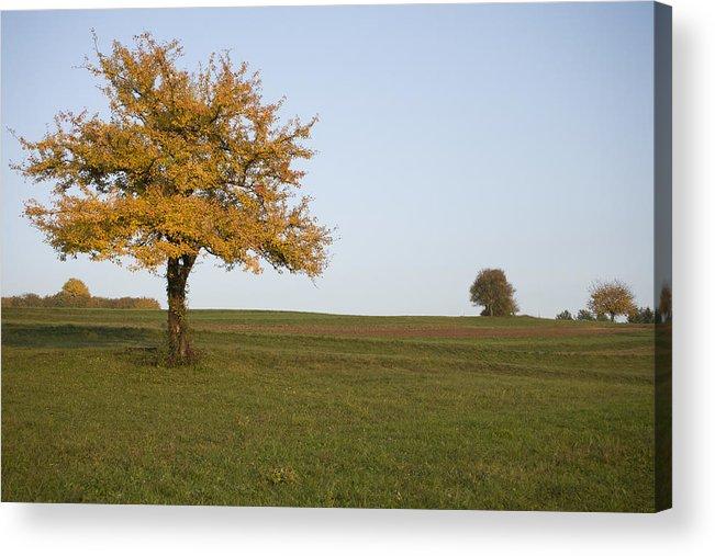 Autumn Acrylic Print featuring the photograph Autumn by Ian Middleton