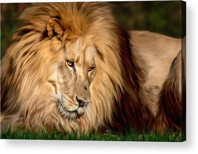 Cameron Acrylic Print featuring the digital art Cameron by Big Cat Rescue