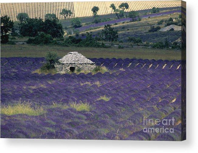 Touristic Acrylic Print featuring the photograph Field Of Lavender. Sault by Bernard Jaubert