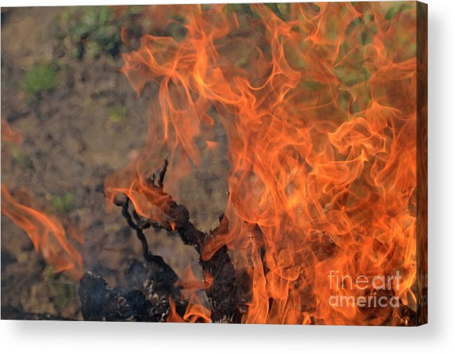 Vitality Acrylic Print featuring the photograph Log Fire And Flames by Sami Sarkis