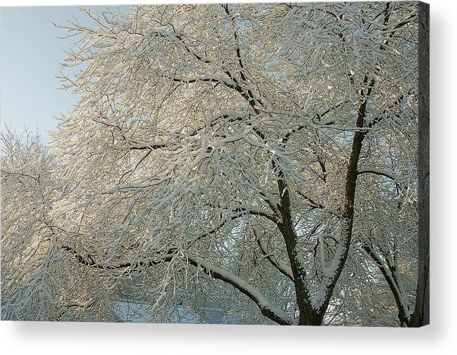 Snow Acrylic Print featuring the photograph Morning Sunshine by Kristine Patti