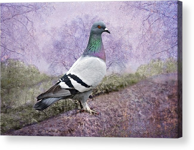 Pigeon Acrylic Print featuring the photograph Pigeon In The Park by Bonnie Barry