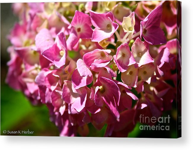 Outdoors Acrylic Print featuring the photograph Pink Party by Susan Herber