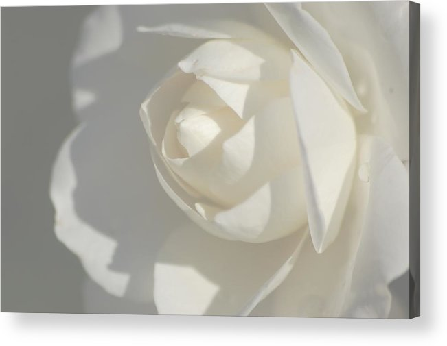 Acrylic Print featuring the photograph White by Meeli Sonn