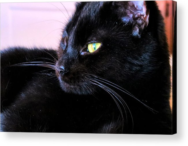 Cat Acrylic Print featuring the photograph Green Eyes by Art Dingo