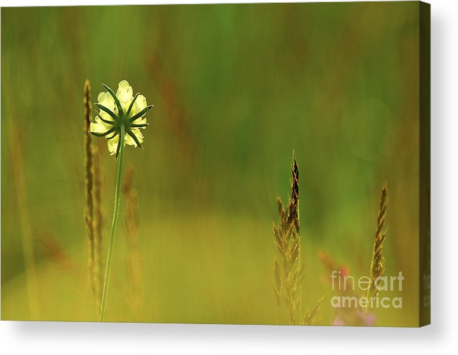 Bloom Acrylic Print featuring the photograph Flower by Odon Czintos