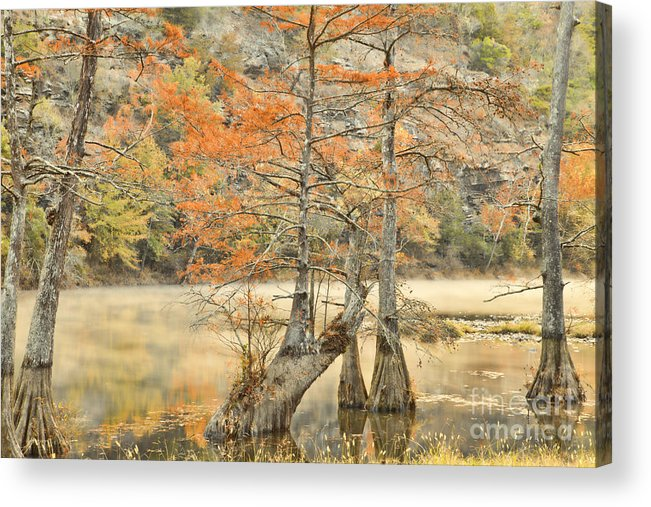 Landscape Acrylic Print featuring the photograph Cypress Trees In The Mist by Iris Greenwell