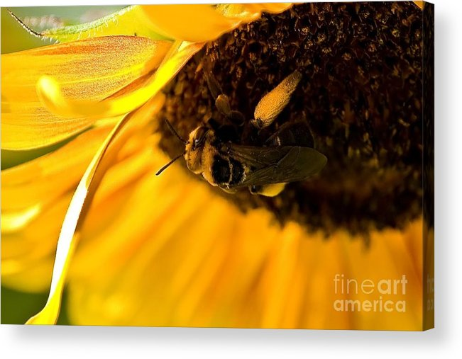 Bee Acrylic Print featuring the photograph A Full Load by Beth Phifer