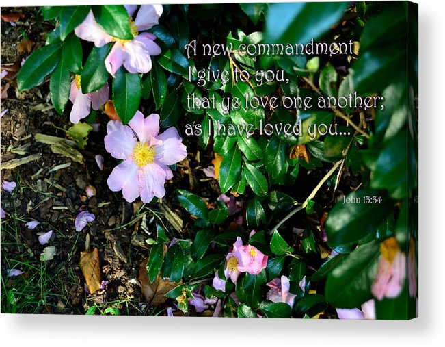 Scripture Acrylic Print featuring the photograph A New Commandment by Larry Bishop