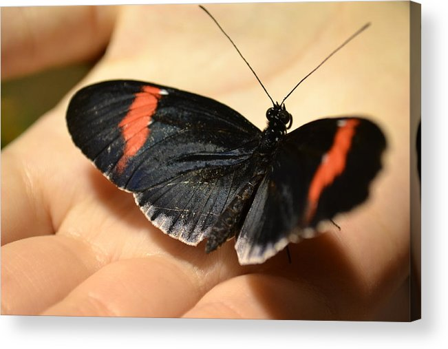 Butterflies Acrylic Print featuring the photograph A Simple Touch by Bella Photography