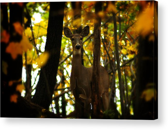Hovind Acrylic Print featuring the photograph Alert Doe by Scott Hovind