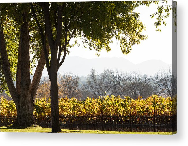 Autumn Acrylic Print featuring the photograph Autumn In A Vineyard by Dina Calvarese