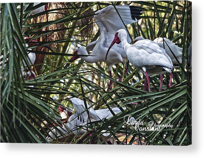 Crane Acrylic Print featuring the photograph Aviary by Linda Constant