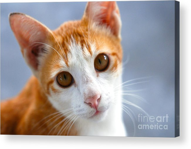 Art Acrylic Print featuring the photograph Awwww by Ivy Ho