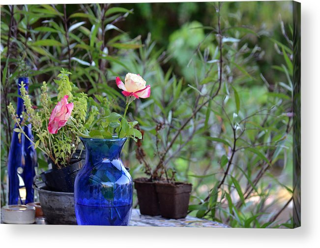 Garden Acrylic Print featuring the photograph Back Yard Roses by Charles Bacon Jr